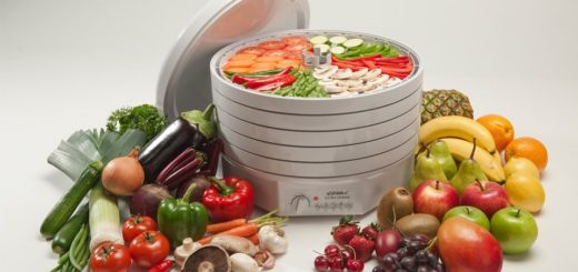 как выбрать сушилку для овощей и фрутов