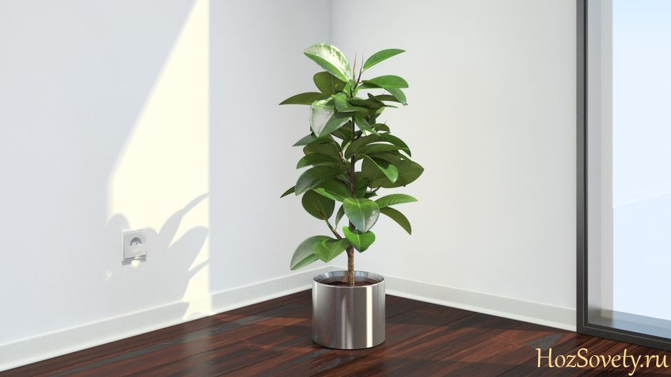 plant01