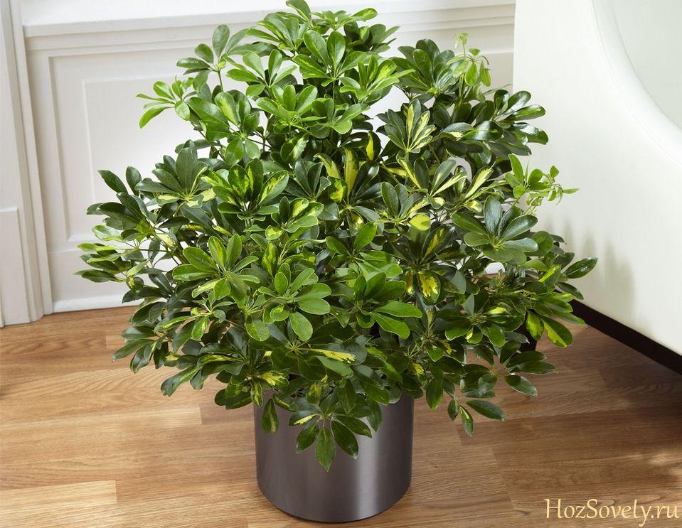 plant06