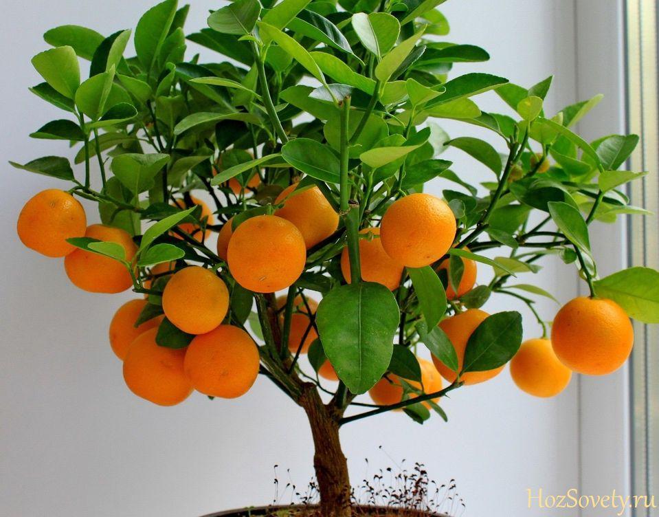 plant07