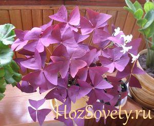 Какие цветы лучше выращивать в домашних условиях?