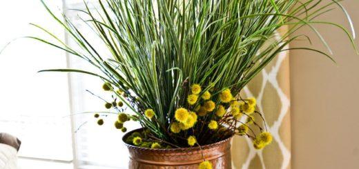 как избавиться от цветочных мошек