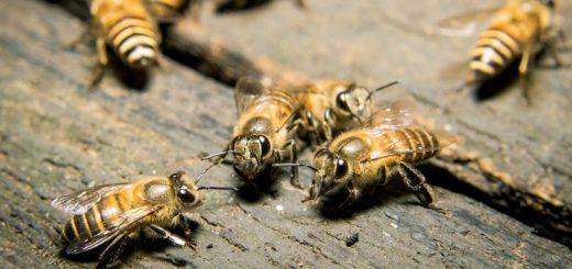 как избавиться от древесных пчел