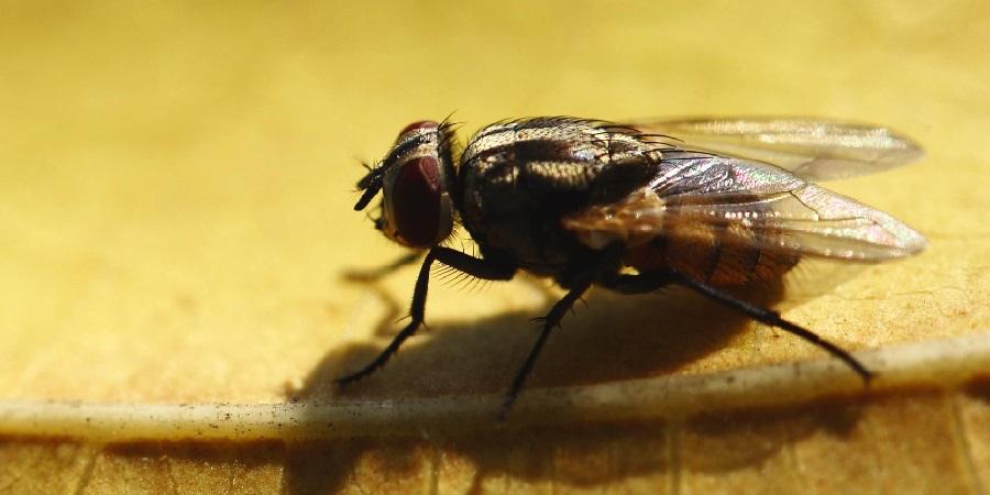 Как избавиться от мух в доме и на даче
