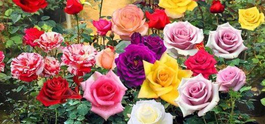 цветы на удачу